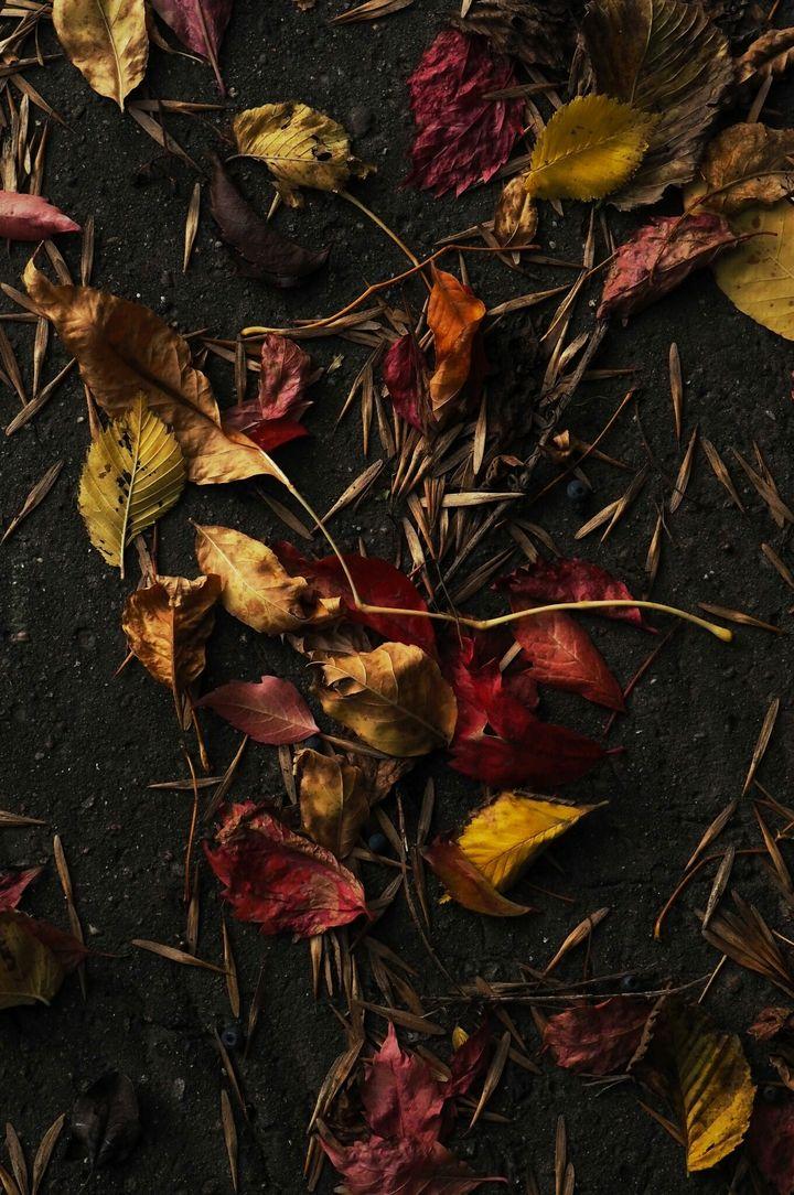 Lubię jesień za kolory