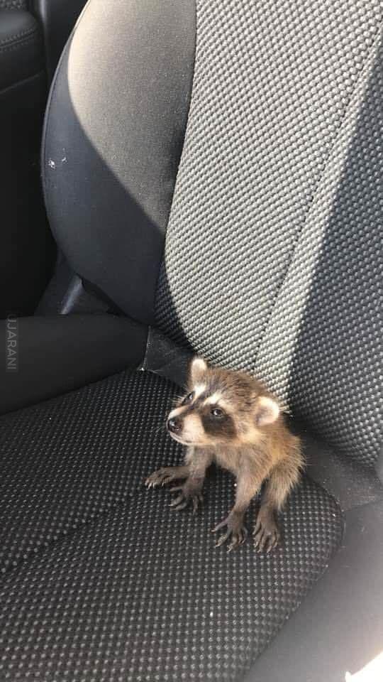 Mały pasażer