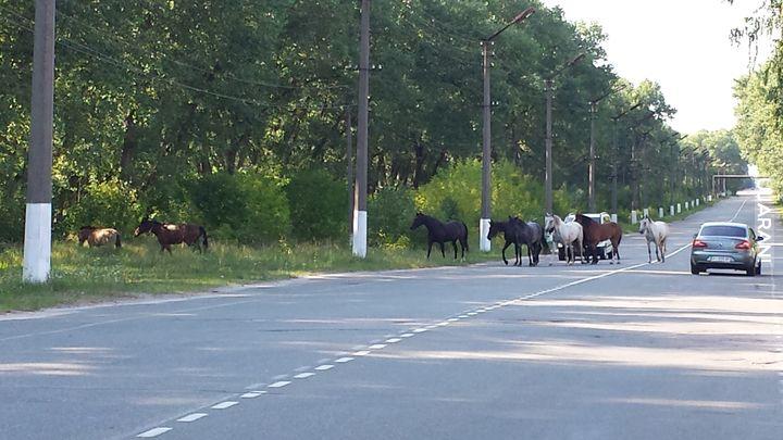 Czarnobylska Strefa Wykluczenia - fauna. Rok 2015.