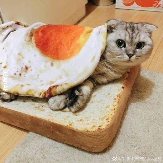 Kanapka dla kota