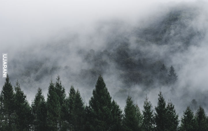 Kolejne ujęcie porannych mgieł w Pieninach ;)