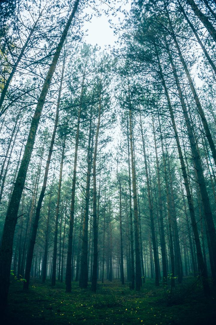 Ciągle las ;)