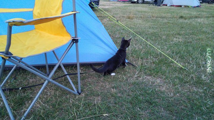 Kot pod namiotem