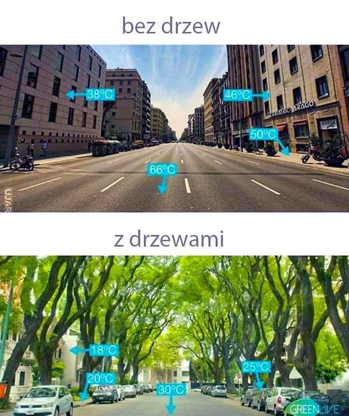 Tak dla przypomnienia dlaczego drzewa w miastach być powinny.