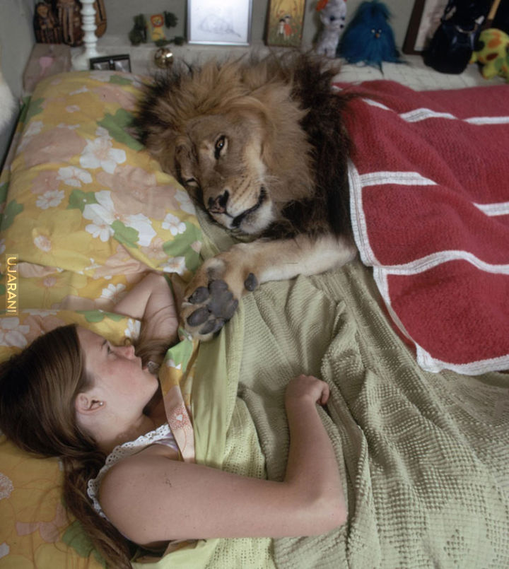 Neil, the lion who lived with family.