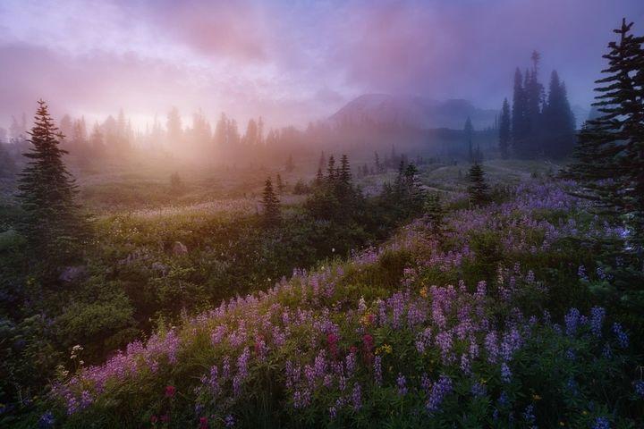 Mount Rainier w stanie Waszyngton, USA