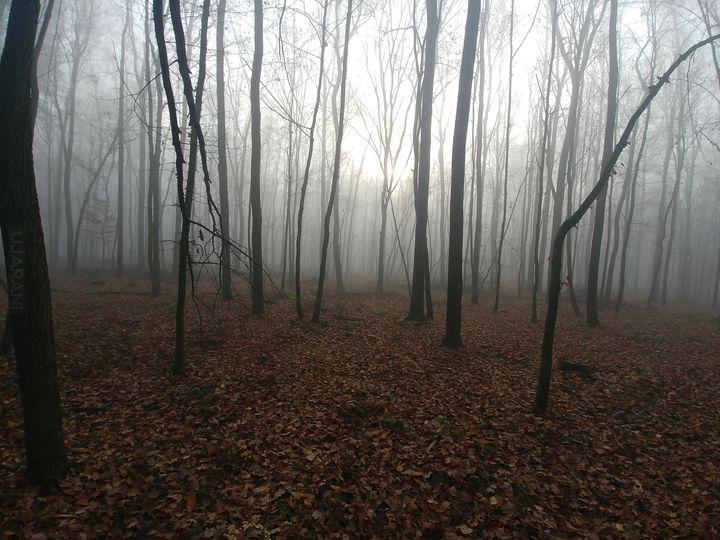 Grzybobranie we mgle