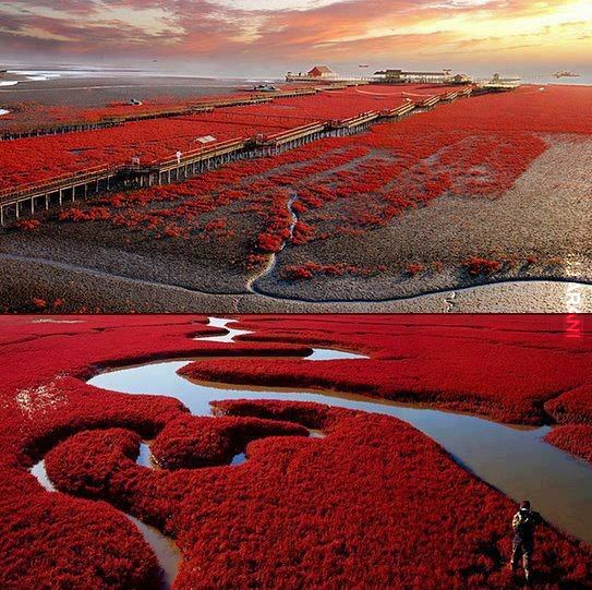 Red Beach  Panjin Chiny