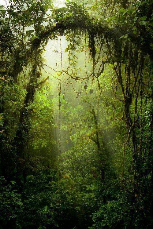 Leśny klimat (63)