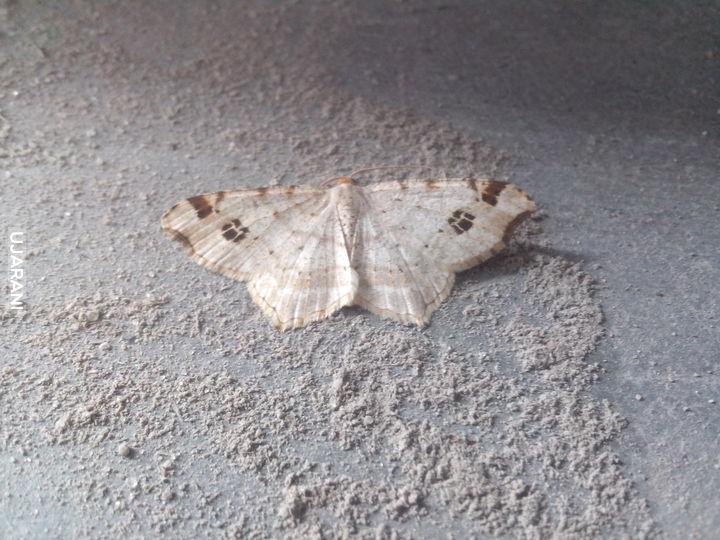 Motyle nocne cz.2