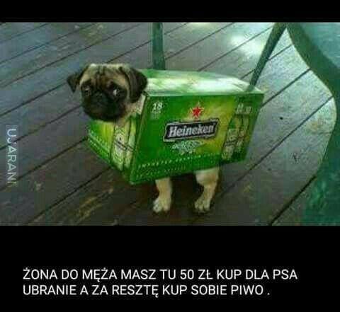 Pies to nie choinka...nie ubieraj go