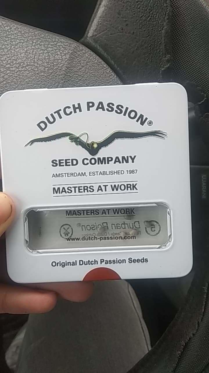 Durban Poison od Dutch Passion