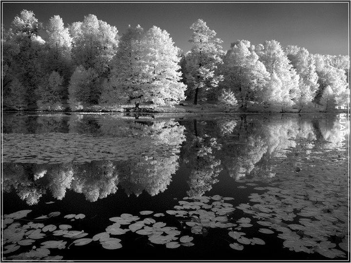 фото черно-белые природы #10