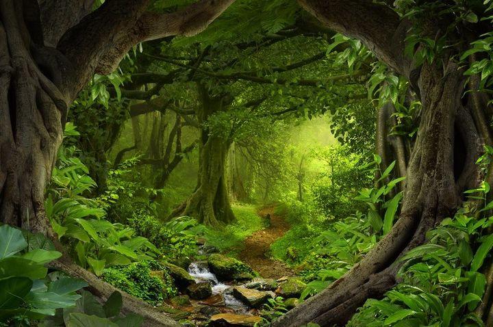 Leśny klimat (64)