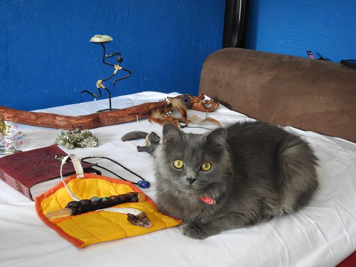 kilka atrybutów kota szamana