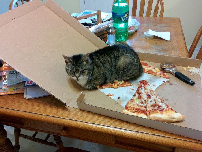 Pizza z kotem, bez anchois