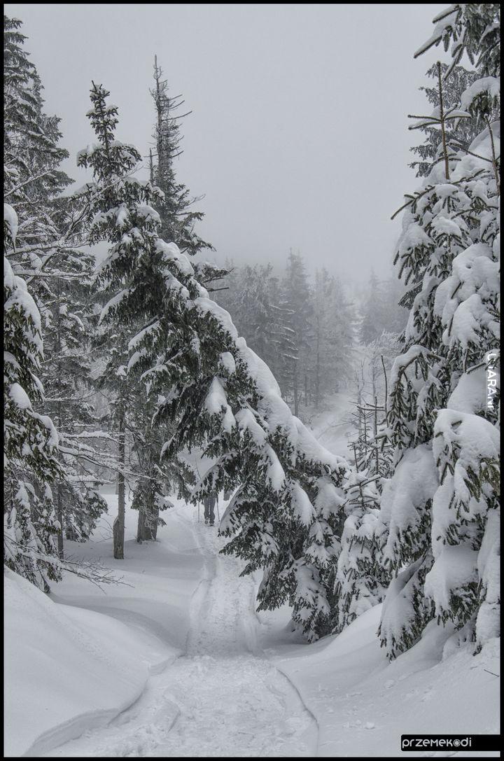 Szlak Zimą