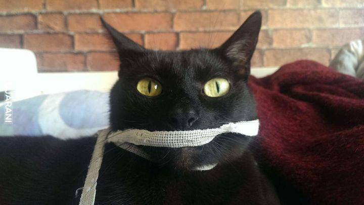 Poznajcie mojego kota Victora