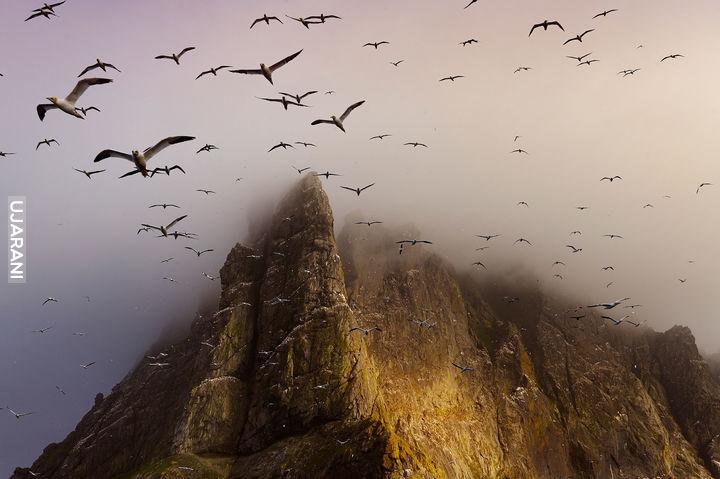 Szkocka wyspa Boreray