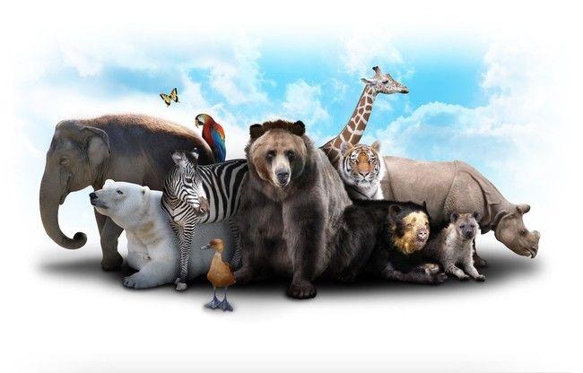 4 października Międzynarodowy Dzień Zwierząt !