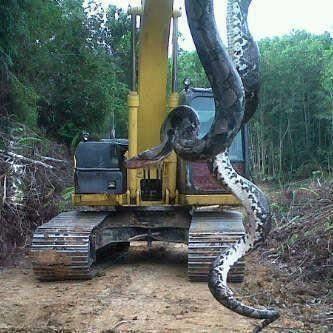 Ciekawostki o wężach.