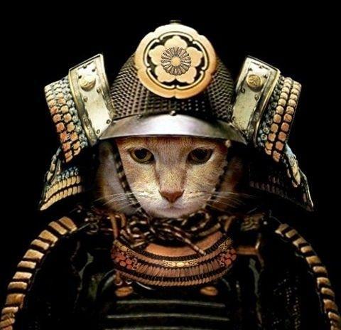 Kot samurai :D