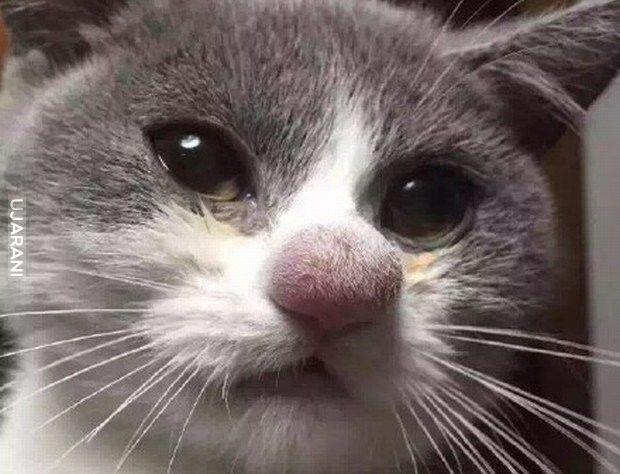 Koteł powąchał psssscółkę