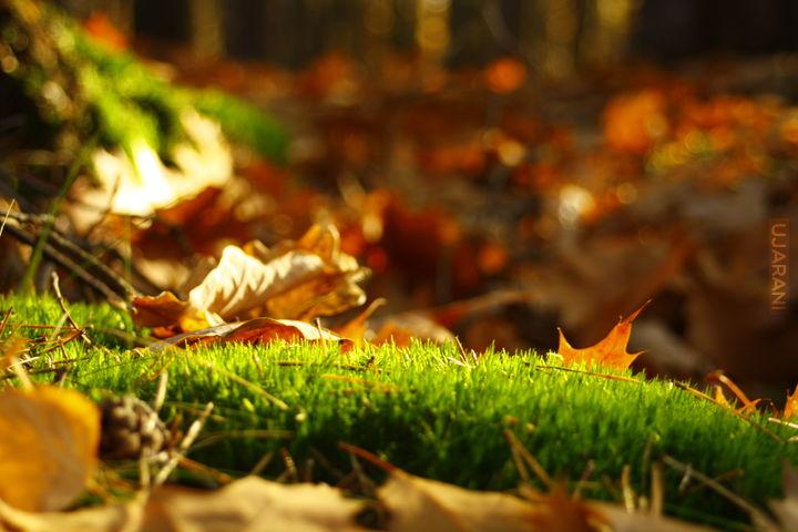Złota jesień ;)