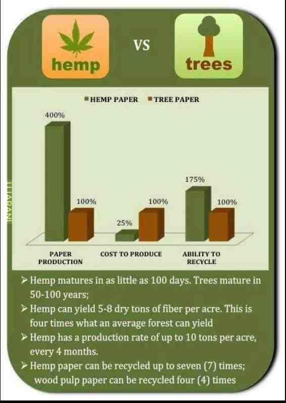 hemp body product essay
