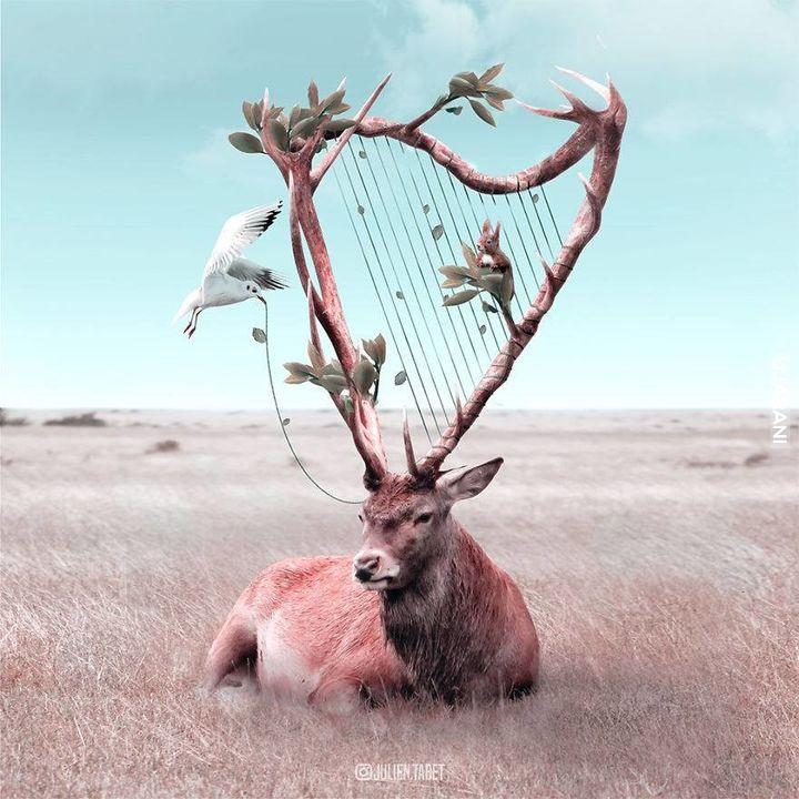 Muzyka lasu