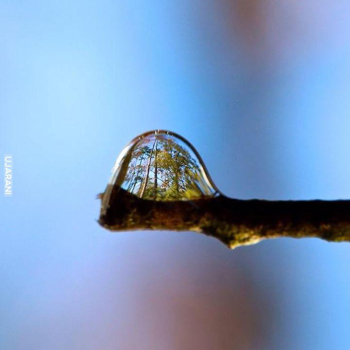 Świat w kropli wody