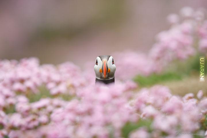 Peryskop - zdjęcie własne