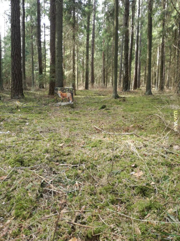 Znalezione w lesie