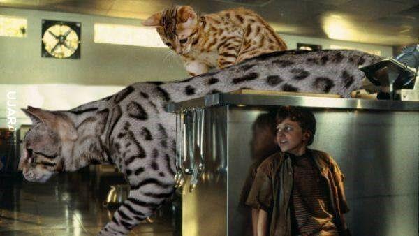 Jurassic Cat