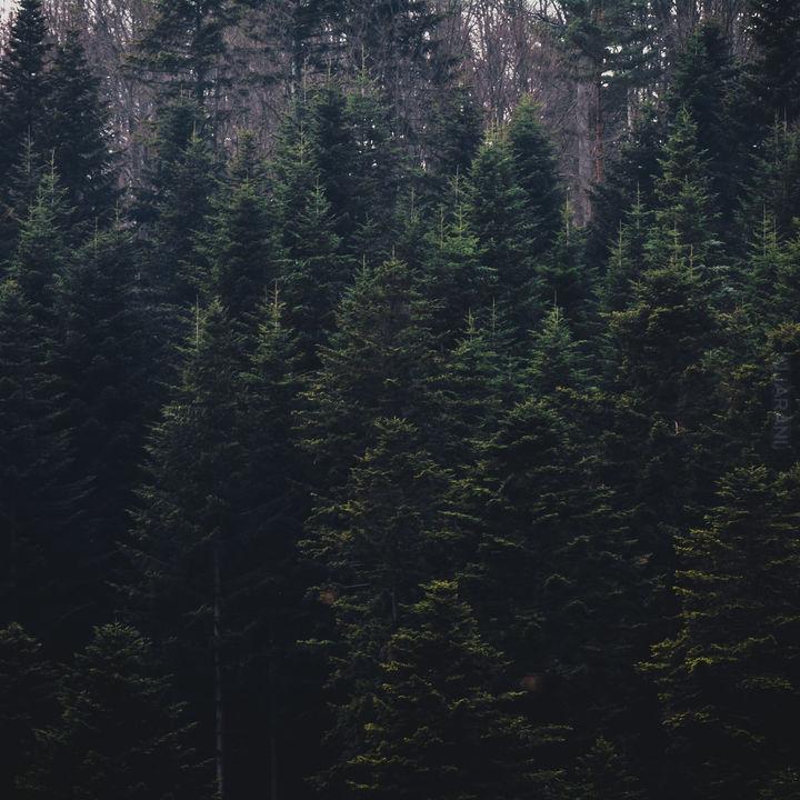 Las na zboczu góry