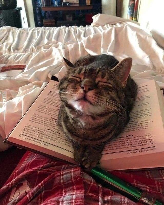 Aby odblokować książkę pomiziaj :D