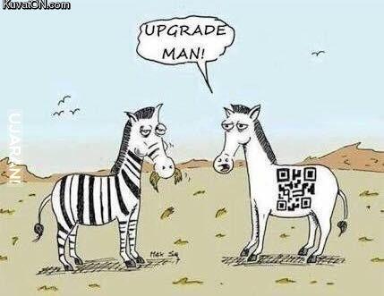 Modern Zebra