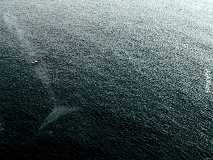 duży wodny zwierzęć