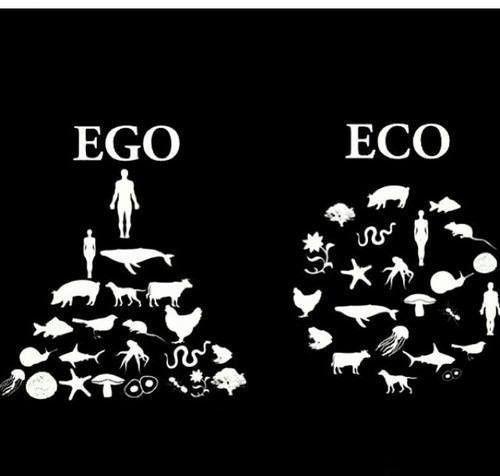 Ego & ECO