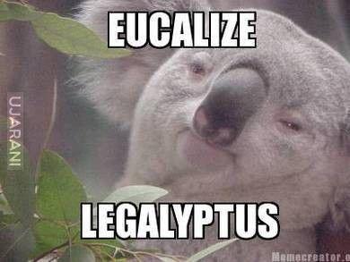 Eucalize