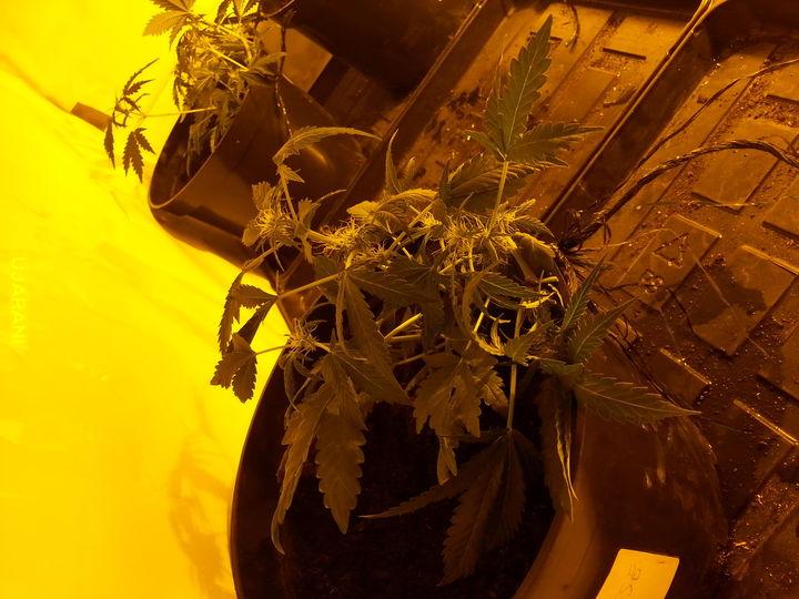 Roślinki 2