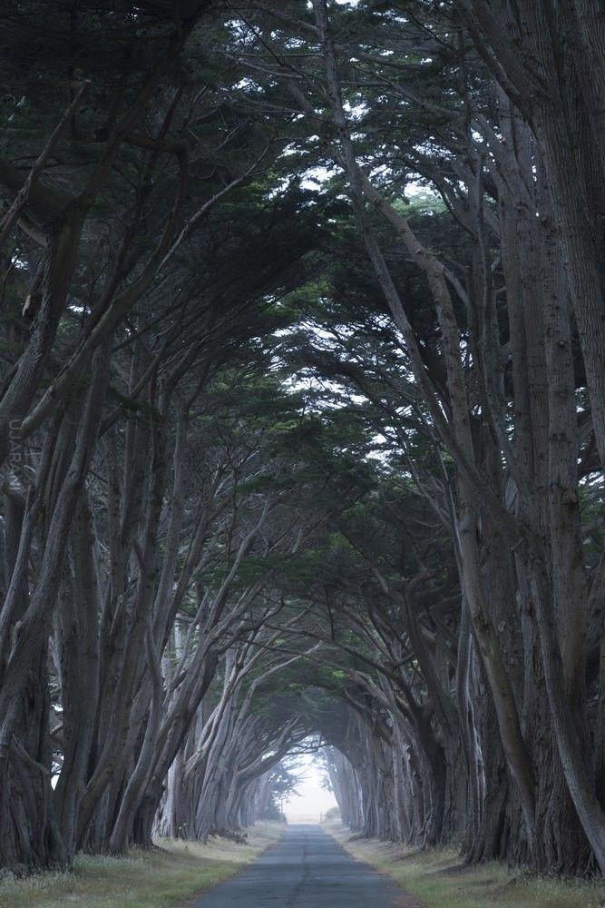 Historia drzew (39)