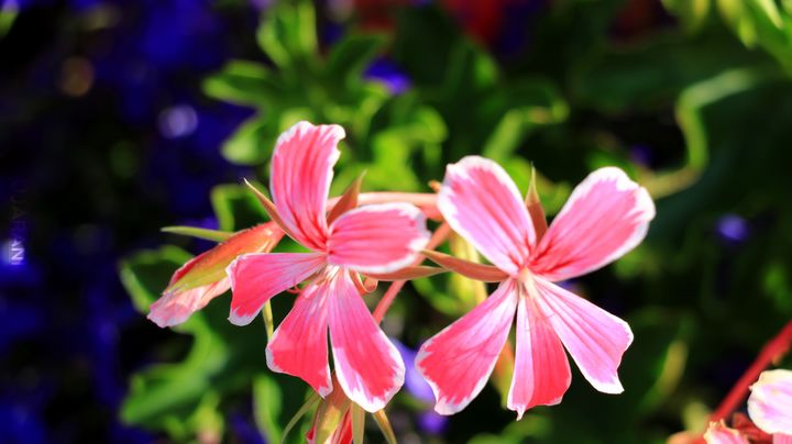 Takie kwiatki.