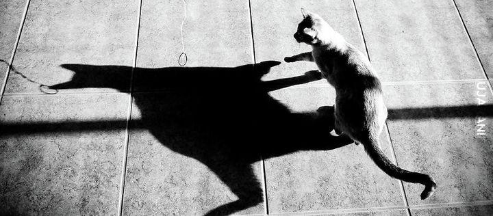 Koci cień