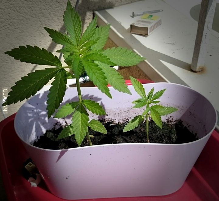 Rosną maleńkie :3