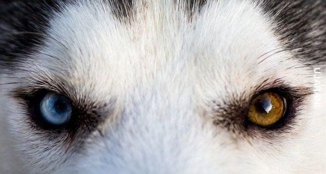 O czym świadczy kolor oczu? Cechy charakteru.