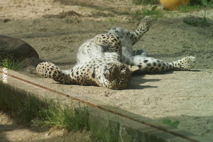 Ogród zoologiczny w Dvur Kralove, Czechy