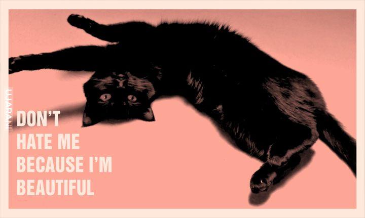 Kotów nigdy dość! :)