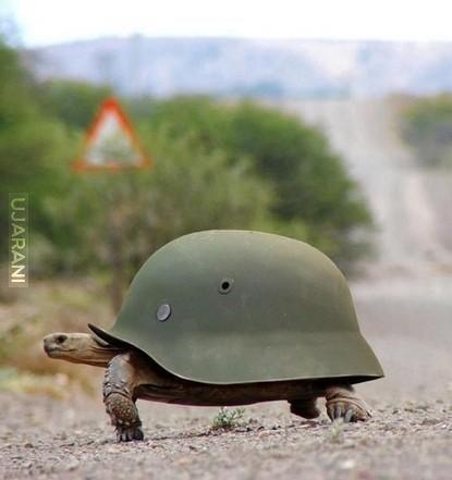 Niemiecki żółw