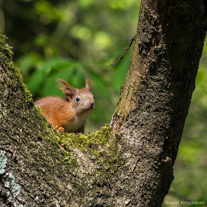 Spotkane w lesie